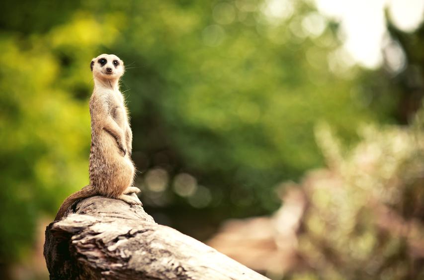 Mit Virtual Reality auf Natur und Umwelt aufmerksam machen - Virtuelle Safari und PETA Hasengespräch